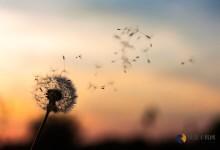 当幸福来敲门,梦想需要自己捍卫<i></i>-贝壳主机网